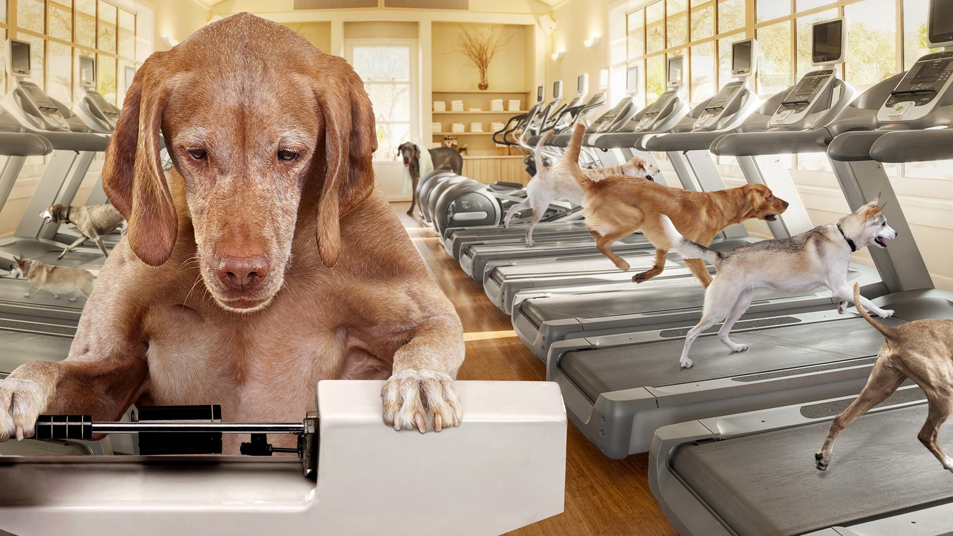 gold-dog-dry-weight-management-alt